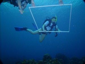 Diving to perform coral surveys for MARVET - Grand Cayman